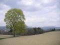 Strom na Čermákových Rovních, 30.dubna 2005