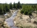 Potok mezi Václavíkovou Studánkou a Jizerkou, 30.dubna 2005