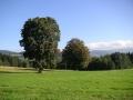 Strom na Čermákových Rovních, 1.října 2005