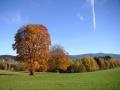 Strom na Čermákových Rovních, 28.října 2005