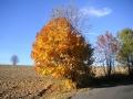 Pod Vysokým nad Jizerou, nad Starou Vsí, 28.října 2005