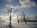 Pláň se stromy nad Příchovicemi pod Hvězdou, 4.února 2006