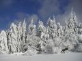Zapadaný les nad Příchovicemi pod Hvězdou, 11.února 2006