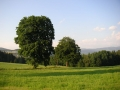 Strom na Čermákových Rovních, 19.srpna 2006